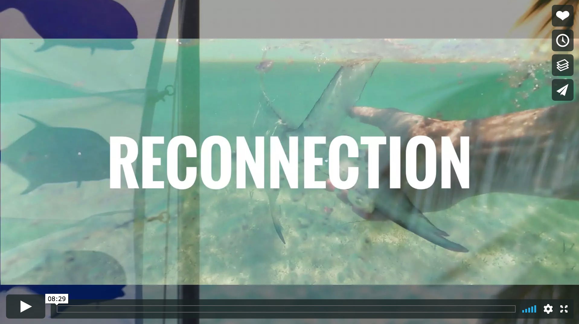 """""""Reconnection"""" – New Video"""